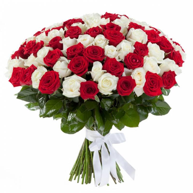 """Композиция из 101 красно-белой розы """"Лёд и пламя"""""""