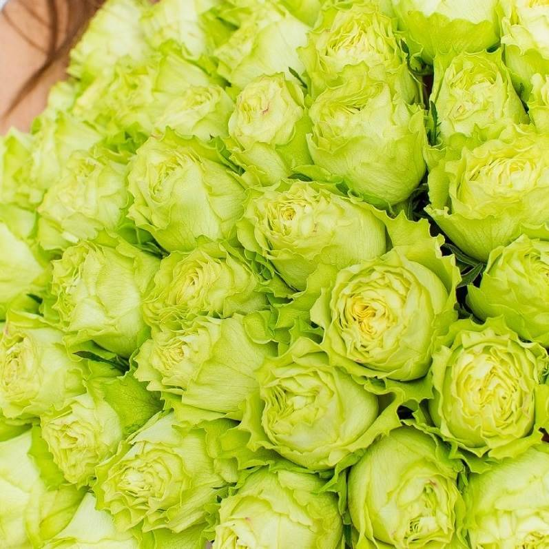 вызвал зеленые розы фото букеты заметят