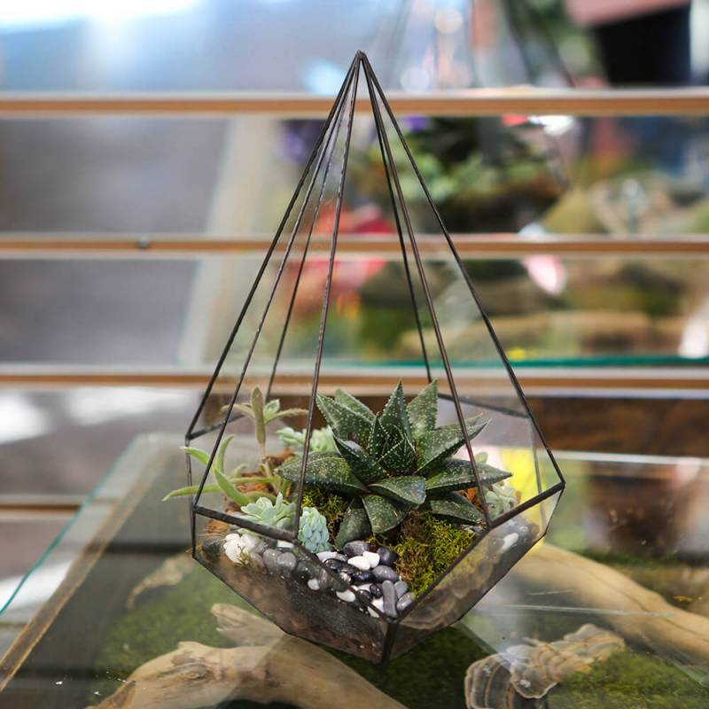 Флорариум Конус средний — суккуленты