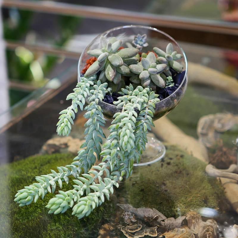 Флорариум с каменной розой в стеклянной вазе