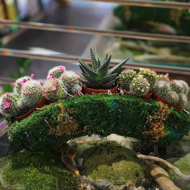 Композиция из кактусов и сиккулентов