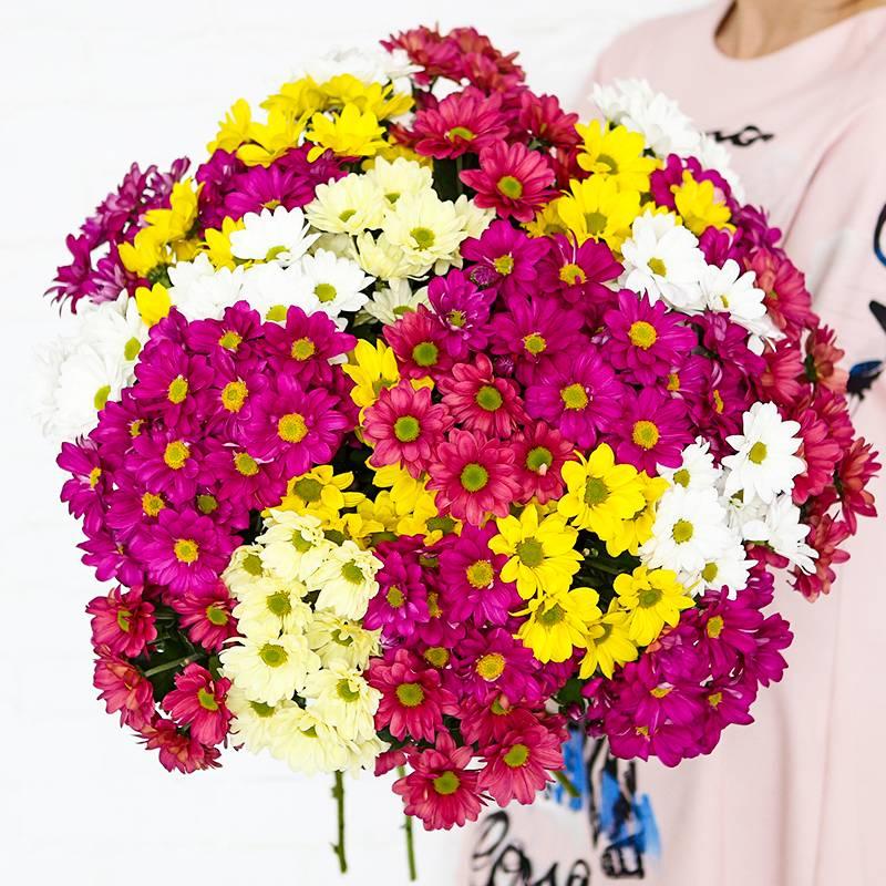 Букет из 35 разноцветных хризантем