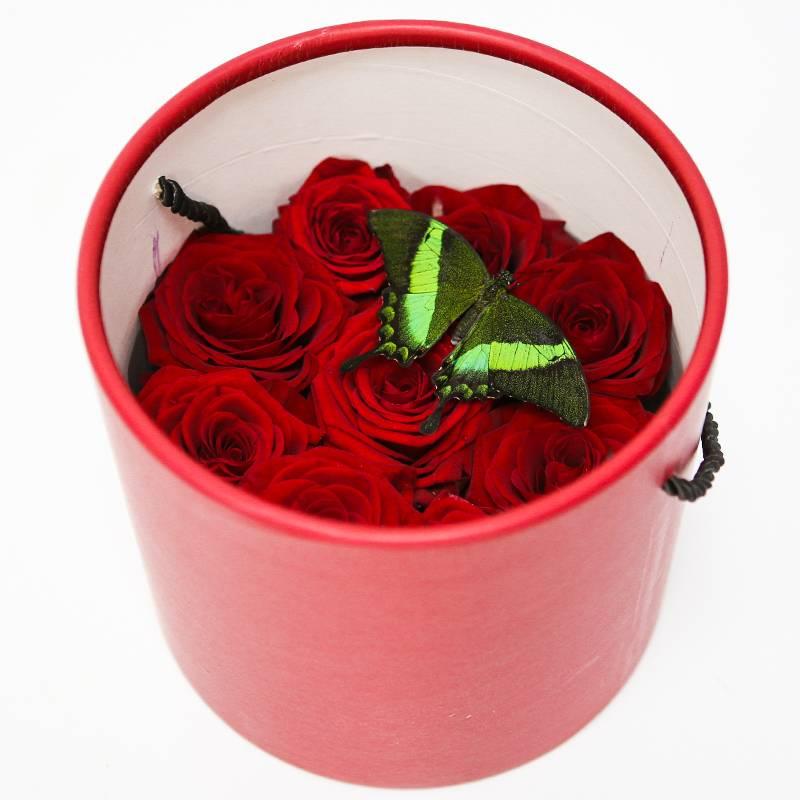 Шляпная коробка с живой бабочкой
