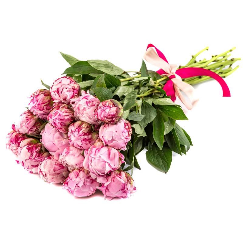 Букет из 15 розовых пионов.