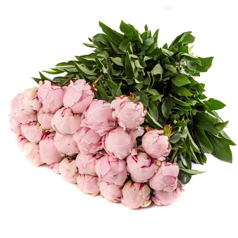 Букет из 25 нежно розовых пионов.