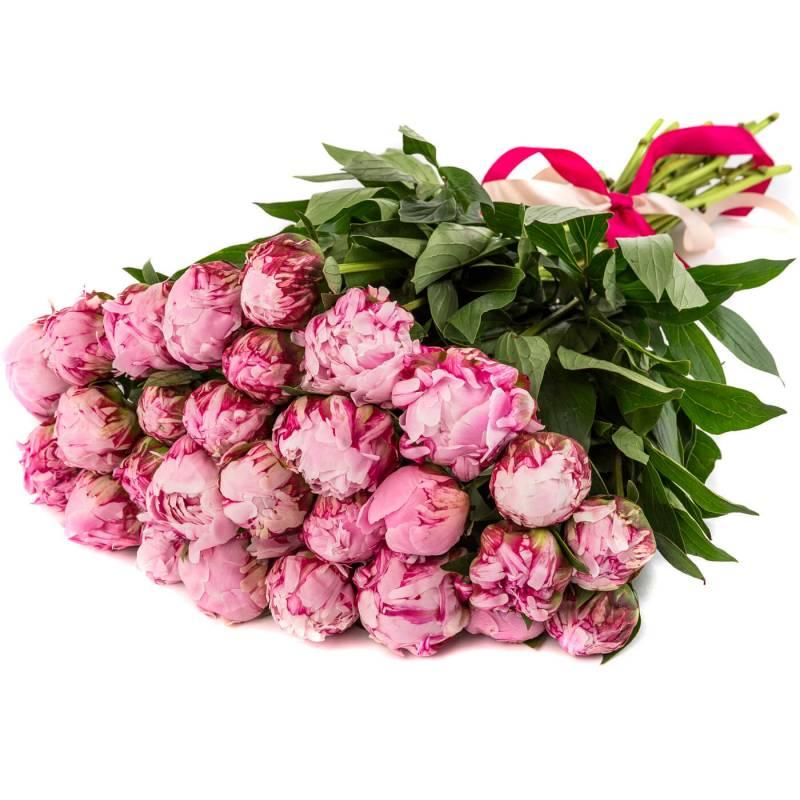 Букет из 25 розовых пионов.