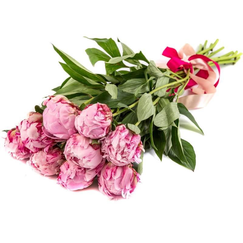 Букет из 9 розовых пионов.