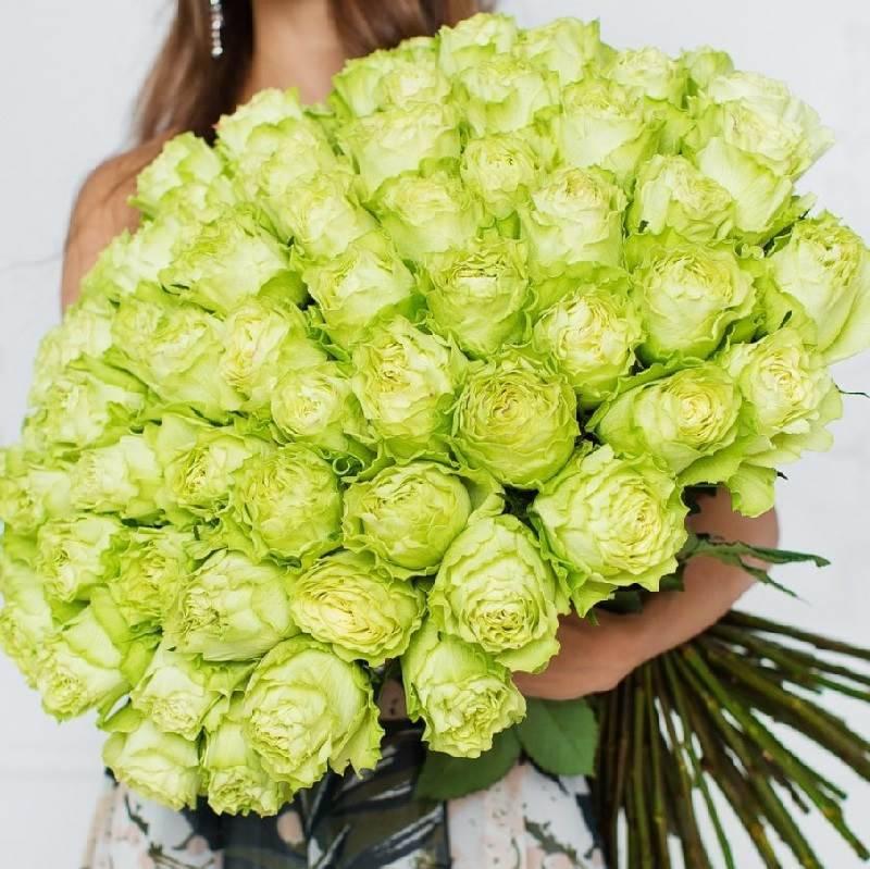 Букет зеленых роз (Эквадор) сорт Limonade