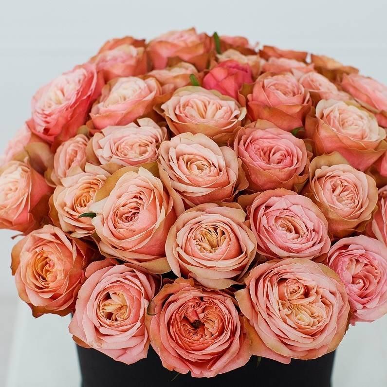 Пионовидная роза «Kahala»