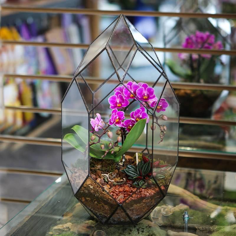 Флорариум Фаберже — орхидея