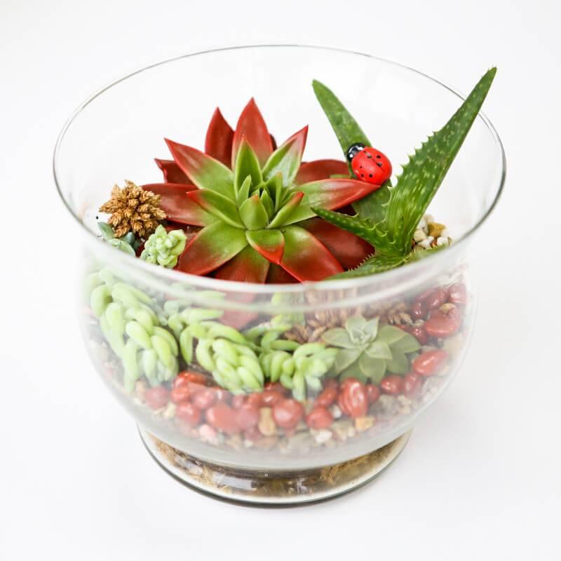 Флорариум в стеклянной вазе