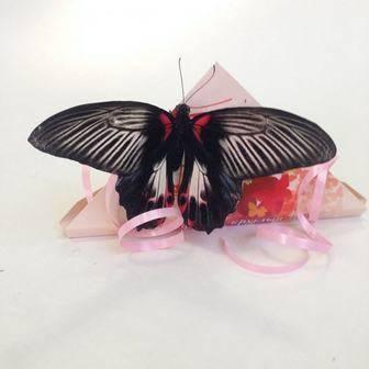 Конверт для бабочки