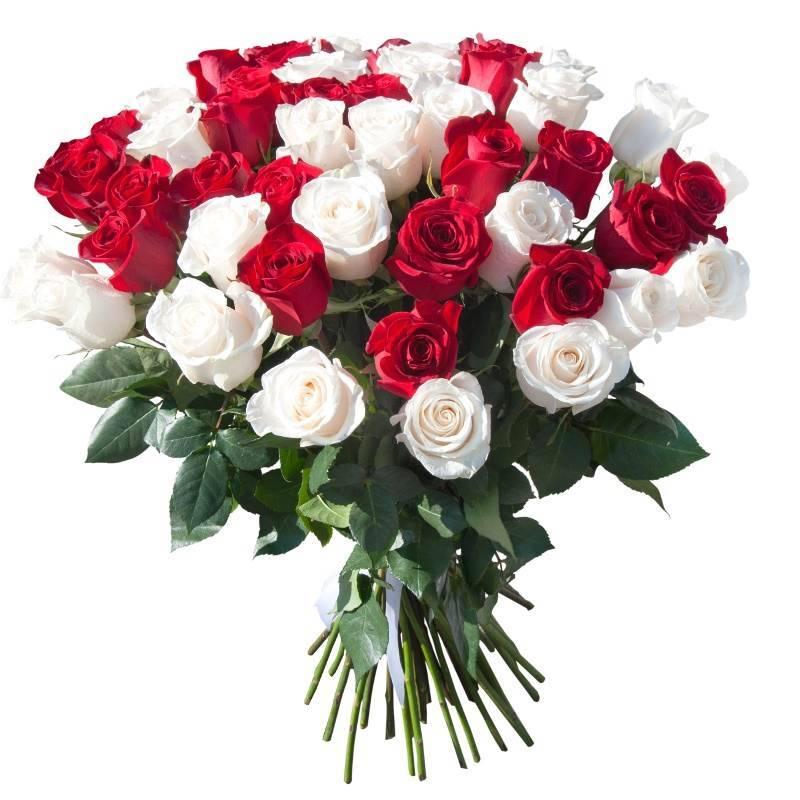 51 Белая и красная розы