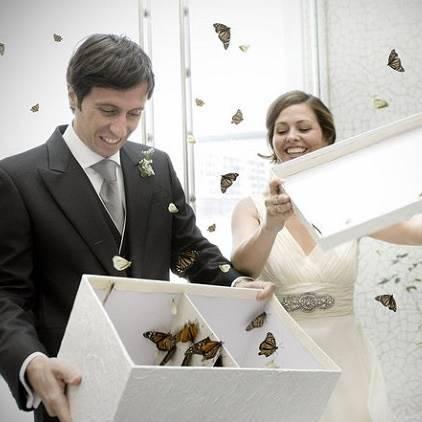 Салют из 10 и более бабочек
