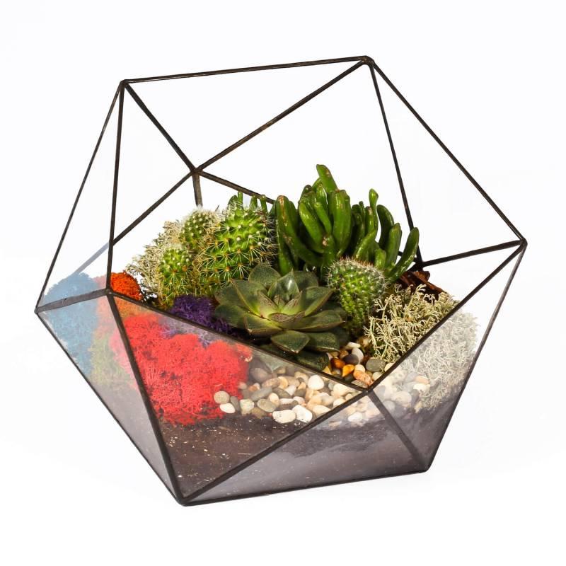 Флорариум икосаэдр большой — кактусы