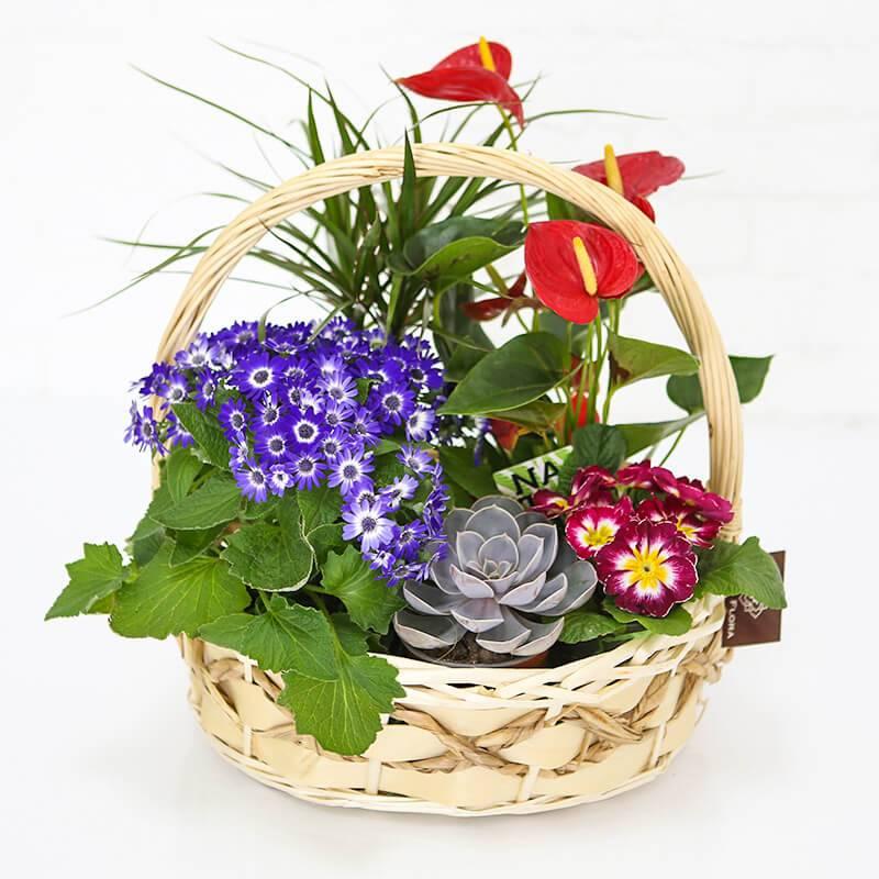 Корзинка с комнатными растениями