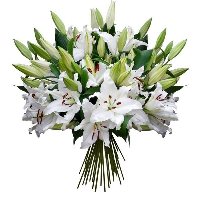 для пауэрлифтинга красивый букет белые лилии фото малышки, меру скромные