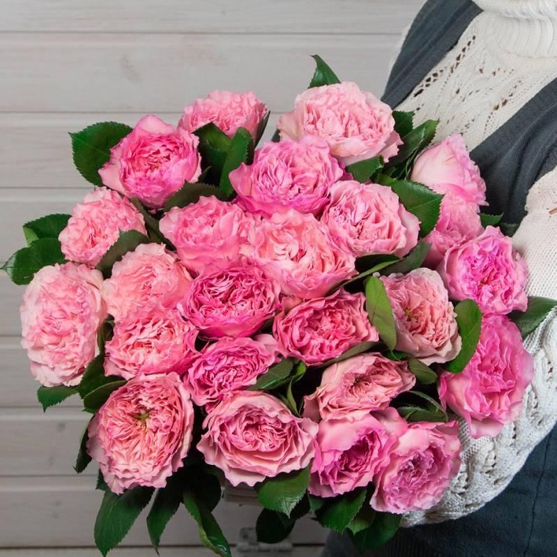 "Пионовидная роза ""Мария Тереза"""