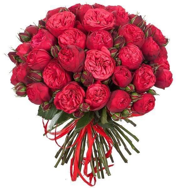 """Пионовидные розы сорта """"Red Piano"""""""