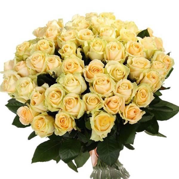 Букет из 101 кремовой розы.