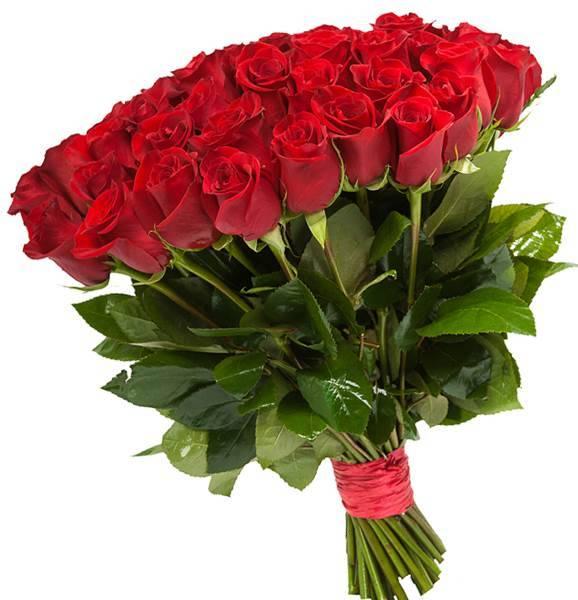 Розы красные  Explorer (Эквадор)