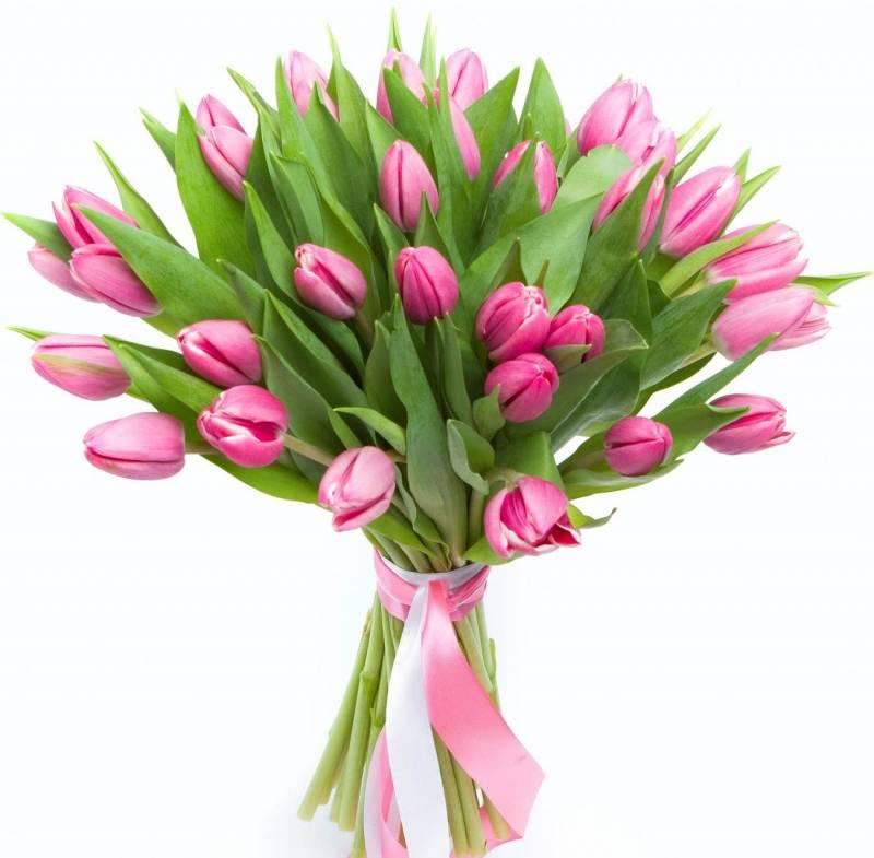 Ярко розовый тюльпан
