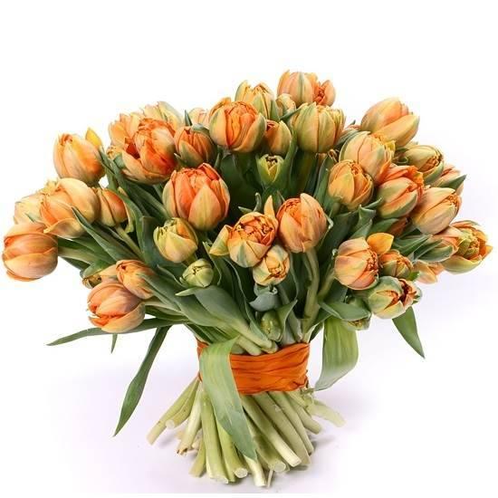 Желто-оранжевые  пионовидные тюльпаны
